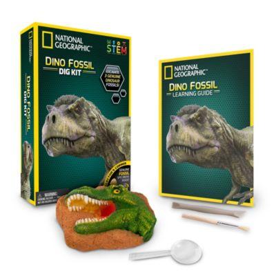 Bandai set arqueología con fósiles de dinosaurios, National Geographic